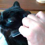 くしけずりと猫草02