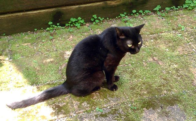 中庭の黒猫姉様03