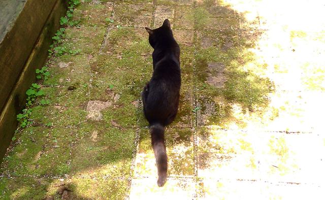 中庭の黒猫姉様02