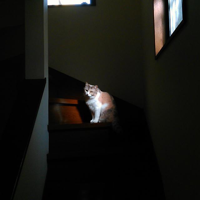 cat161206